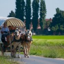 't Wulleminhof - Covered wagon rides